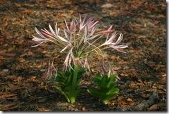05_Flower season