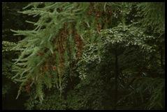 Prachtige bomen