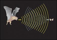 vleermuizen echobaken