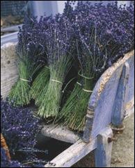 lavender-harvest