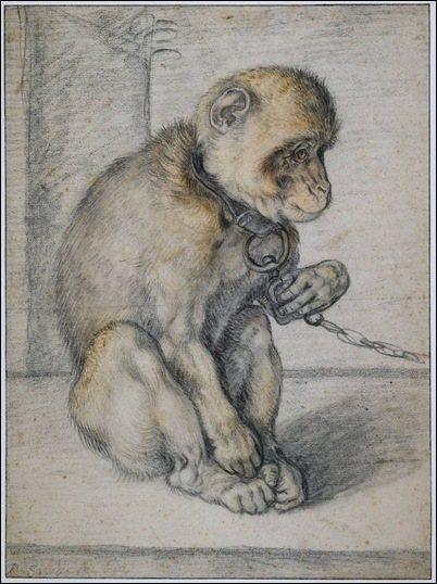 Hendrik_Goltzius - Monkey on a chain - 1597