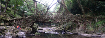 root bridge3