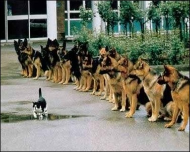 brave_kitten