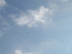 Red Kites - high in the sky