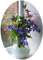 posy of bluebells - red campion - buttercups - cow parsley - wild garlic