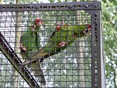 very loud macaws