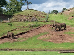Elephants - all three at WMS