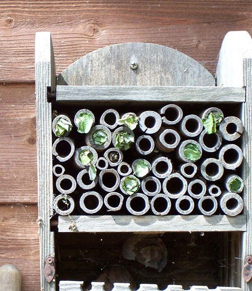 Pole plugging by leaf-cutter bees