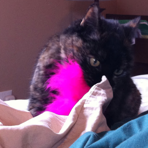Pink feather toy surrenders to kitty