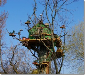 treehouse.3