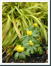 Garden 24 Feb 2010 012
