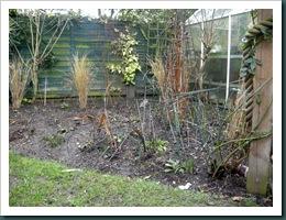Garden 24 Feb 2010 011