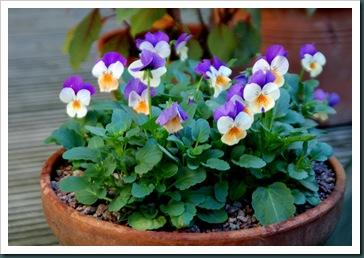 Garden 10 Nov 2009 002