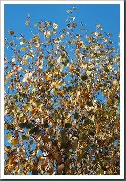 Garden 10 Nov 2009 010