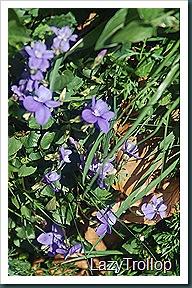 Nymans garden 07 April 2011 042