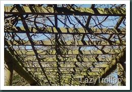 Nymans garden 07 April 2011 061
