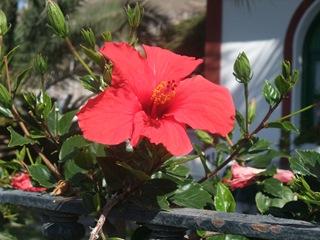 Vakre blomster