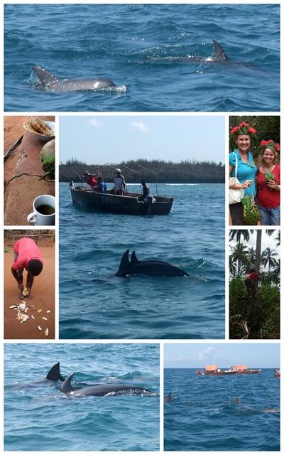 Tanzania Zanzibar delfin safari