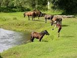 Лошади под цвет речки