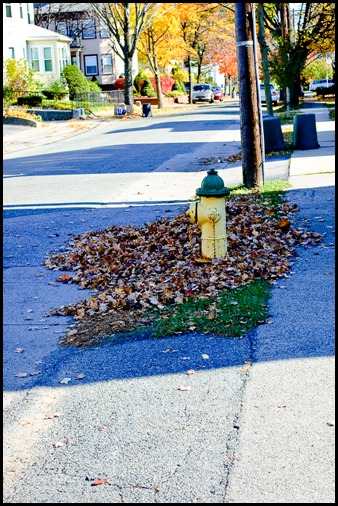 2009-11-03 Leaves 115