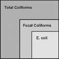Total Coliforms