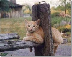 Katt12