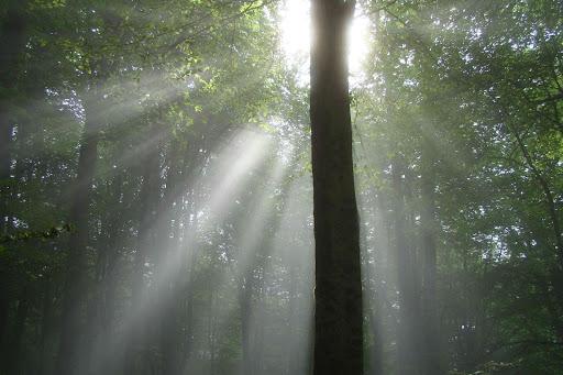 جنگل درازنو - استان گلستان