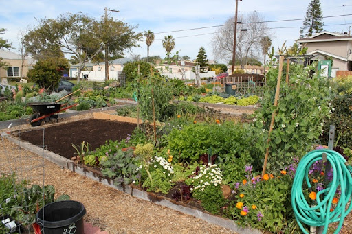 Pacific Beach Community Garden