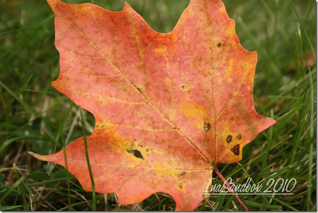 maple leaf with logo