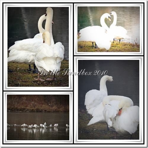 swans mosaic