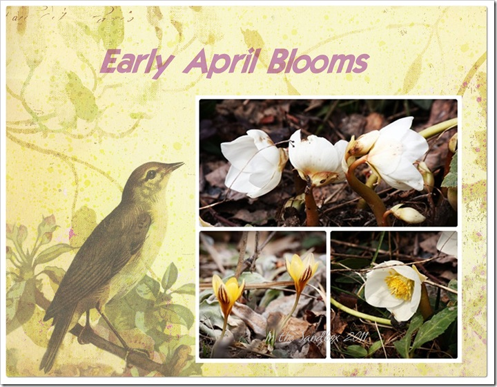 Early April Blooms on Paper