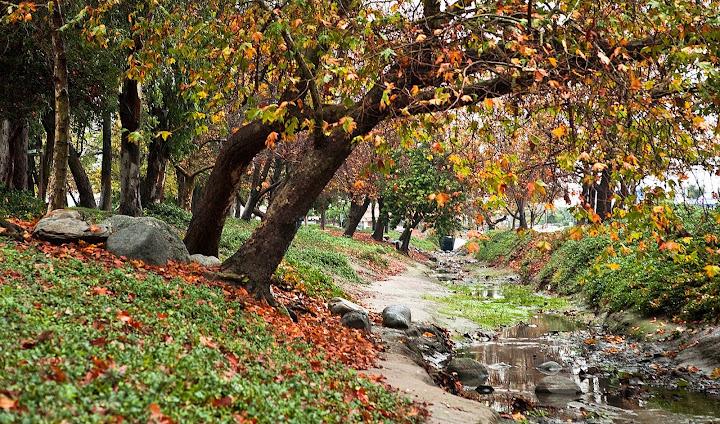 Mùa Thu - Autumn