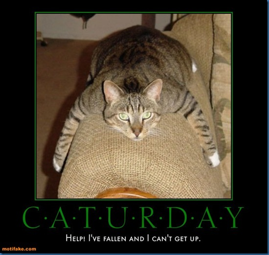 caturday-caturday-poster-day-dec18-cubby-demotivational-posters-1292707505