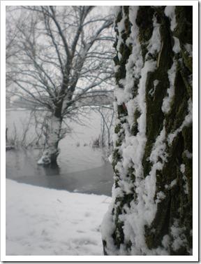 januari2010 027