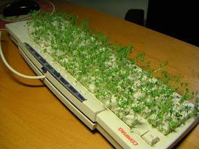 Грядка из клавиатуры
