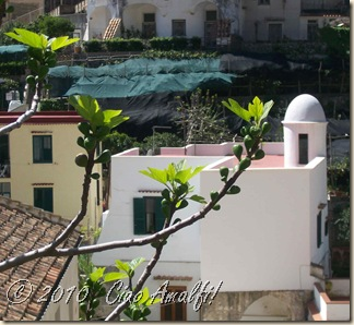 Ciao Amalfi Coast Blog Spring Blossoms6