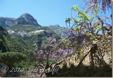 Ciao Amalfi Coast Blog Spring Blossoms5