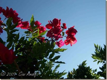 Ciao Amalfi Coast Blog Bougainvillea Sun