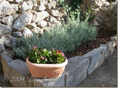 Ciao Amalfi Coast Blog Lavender trimmed