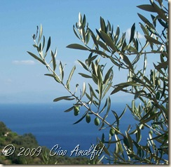 Ciao Amalfi Coast Blog olives close