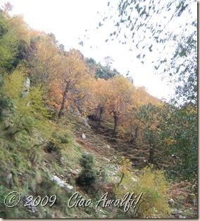 Ciao Amalfi Coast Blog Autumn Tramonti 5