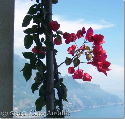 Ciao Amalfi Blog Mamma Agata Bougainvillea