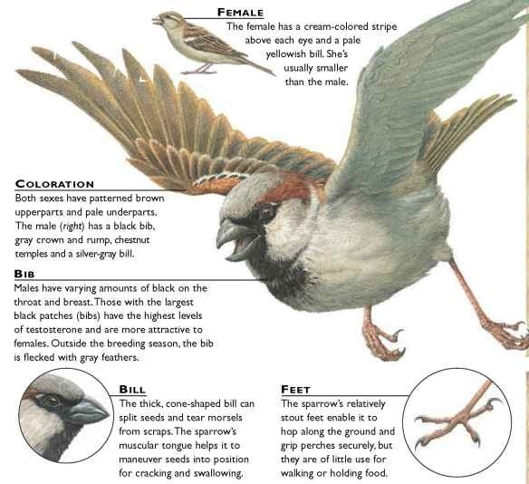 Have you ever hunt sparrows?