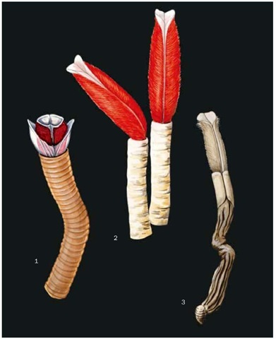 1. Lamellibrachia luymesi; 2. Hydrothermal vent worm (Riftia pachyptila) in tube; 3. Hydrothermal vent worm (Riftia pachptila) without tube.
