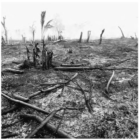 Rain forest destruction by fire in Madagascar. Such deforestation affects the carbon balance in the atmosphere and the diversity of species on Earth.