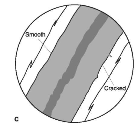 Outer and inner cuticular margins. When viewed with transmitted light, in a medium with a refractive index near that of hair, the cuticle of human hairs appears as a transparent thin band on either side of the hair shaft. The outer cuticular margins (outside surface of the hair shaft) (A, B) can be flattened, serrated, cracked or ragged whereas the inner margin (interface between cuticle and cortex) (C), if distinct, can be smooth or cracked.