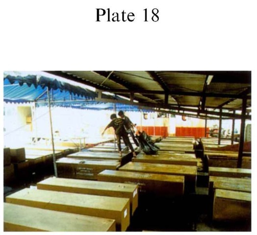 Plate 18 DISASTER VICTIM IDENTIFICATION Inadequate body storage facilities. Aftermath of Lauda Air crash at Phu Khao Kao Chan near Bangkok, Thailand, in 1991. Bodies were stored outside with little protection from the heat or insects; decomposition was rapid. Body handlers were inadequately dressed, some with open footwear. Such a mortuary can become a secondary health hazard for the investigators.