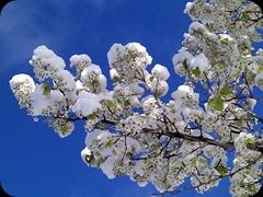 4-29-2011 spring snow (4)