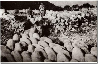 1957 Σπιθάρια - Τσιανταίοι