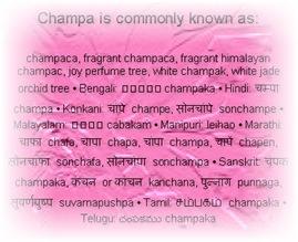 champaa watermark